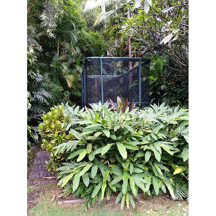 rectangle-trampoline-in-tropical-garden